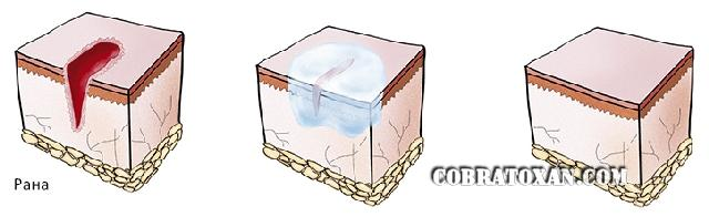 Erythromycin Nghe Инструкция - фото 10