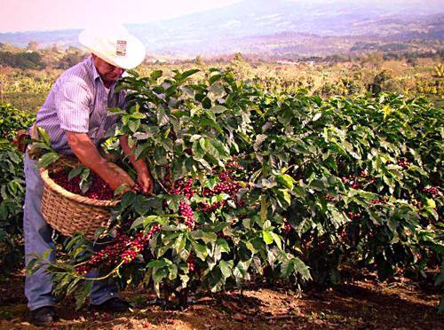 изготовление кофе во Вьетнаме