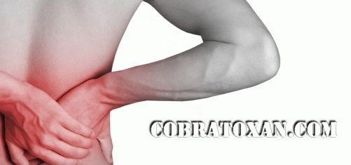 лечение боли в спине кобратоксаном