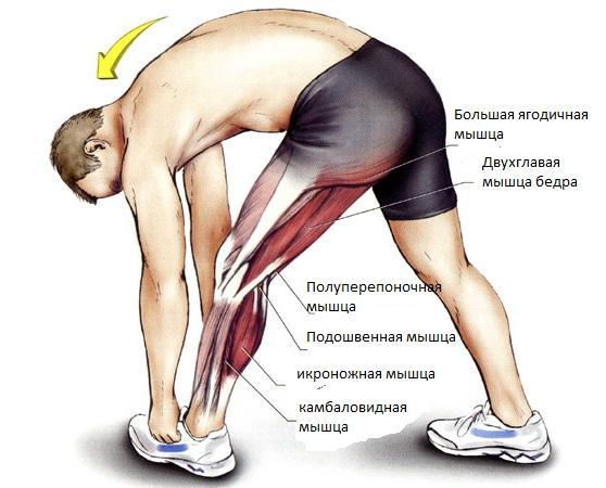 Что делать когда потянул мышцу на бедре