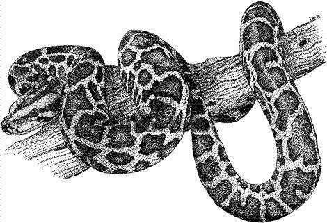 Fat of pythons мазь инструкция на русском