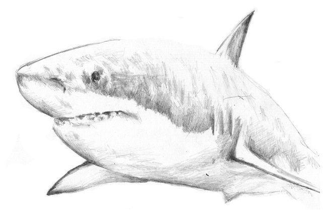 вьетнамский Glucosamine с акулой