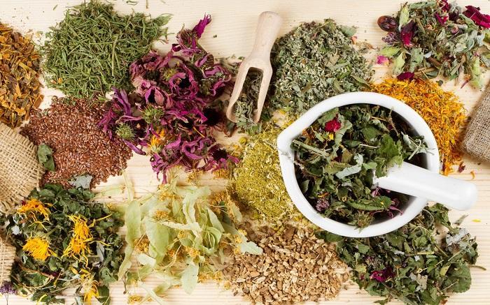 лечебные травы для печени