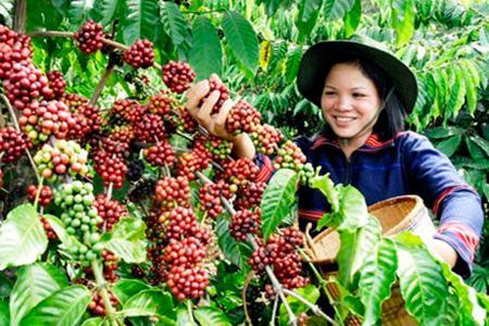 производство Sang  во вьетнаме