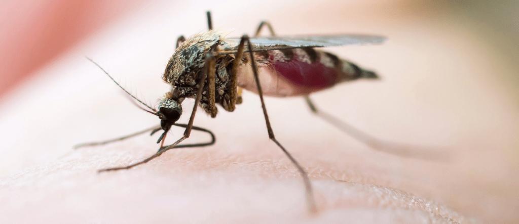 заживление ран после укусов насекомых